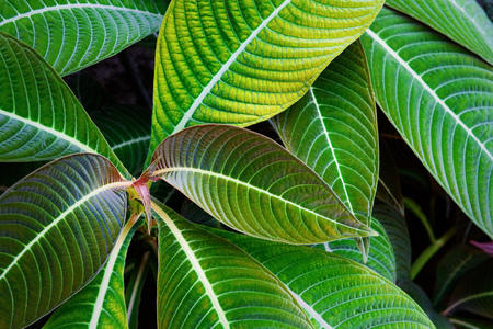 Tropical plants Standard-Bild