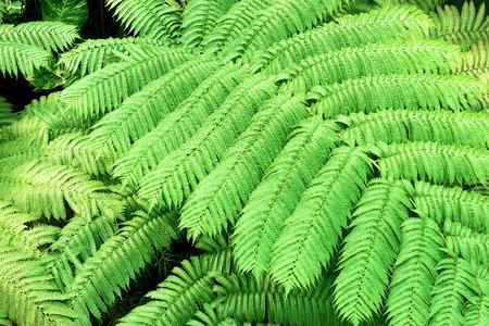 Tropical plants. Ferns. Фото со стока - 81794541