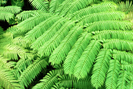Tropical plants. Ferns.