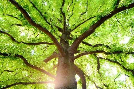 Głębokie drzewa leśne i światło słoneczne