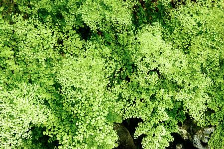 Tropical plants. Ferns. Фото со стока - 81794543