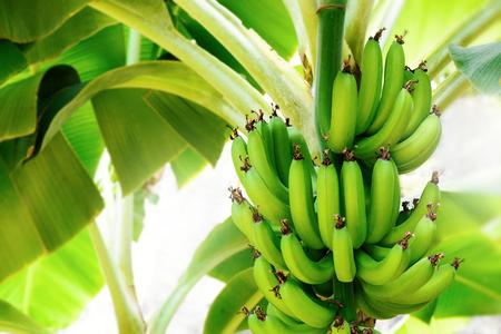 Tropical fruit and Banana.