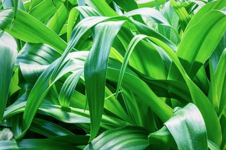 Tropical plant Фото со стока - 81794508