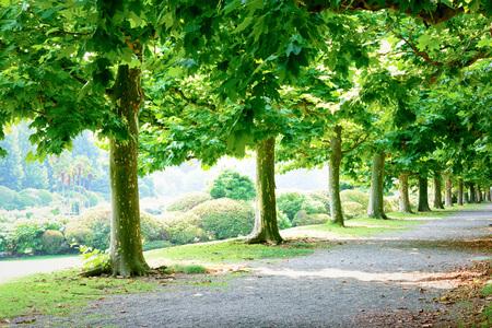 High Trees Park