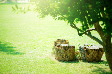 Lawn and stump
