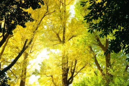 Season of autumn leaves.