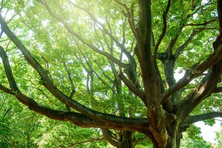 Tree, forest, ecology image