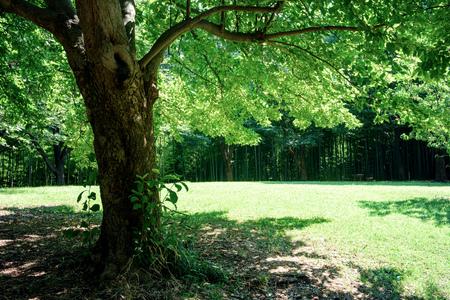 trees of parks on sunny days Фото со стока - 82803140