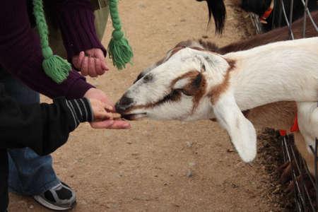 Moeder en kind voeding van landbouw huis dieren