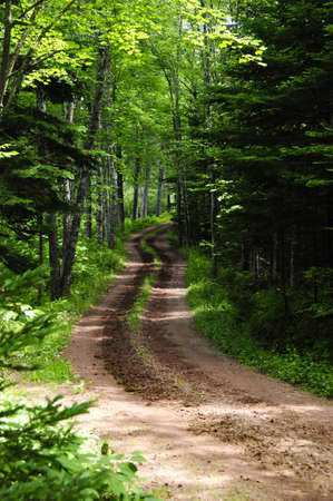 A dirt country road disappearing into the forest Standard-Bild