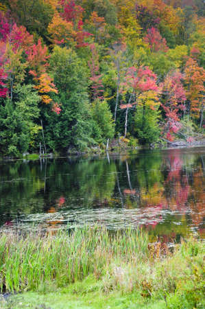 Fall leaves reflected in a river in Vermont