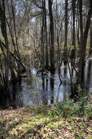 A swamp on the little Pee Dee River in South Carolina