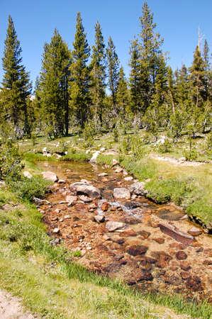 high sierra: A high sierra creek flowing thru a forest landscape Stock Photo