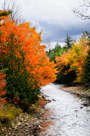 Fall leaves on trees next to a small creek on a stormy day. Imagens