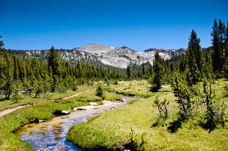 A high sierra stream in Yosemite National Park