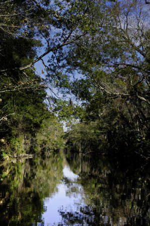 A beautiful swamp in Florida with trees reflecting in the water
