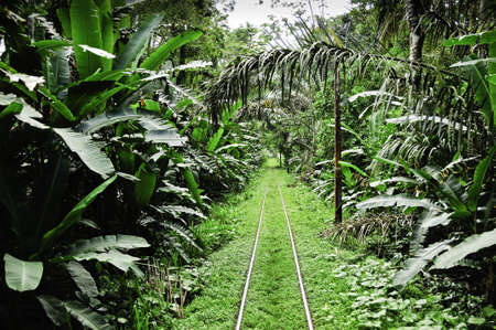 A narrow gauge train track going into the rainforest. Stock Photo