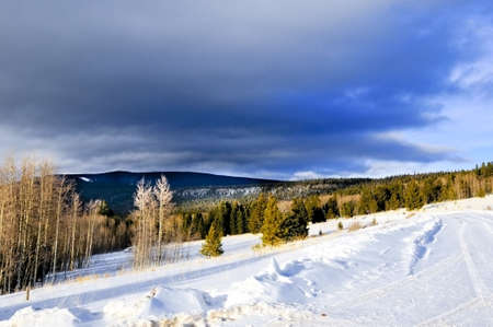 A forest in New Mexico covered in snow photo
