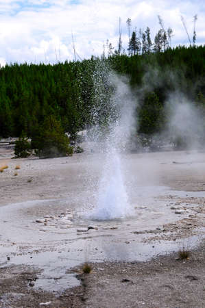 Vixen Geyser erupting at Yellowstone National Park