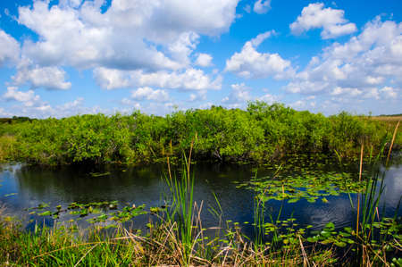 sawgrass: Wetlands in Everglades National Park, Florida