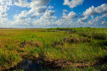 sawgrass: Sawgrass swamp at the Everglades National Park, Florida. Stock Photo
