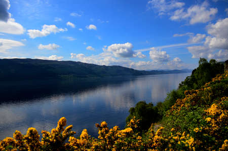 ness: Beautiful Loch Ness Scotland with yellow Gorse flowers on the bank. Stock Photo