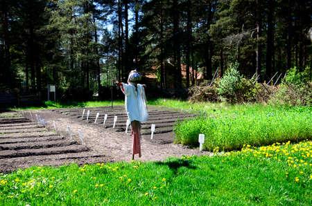 siervo: Espantap�jaros que guarda un campo en Rocca Al Mare Open Air Museum, Tallin Estonia