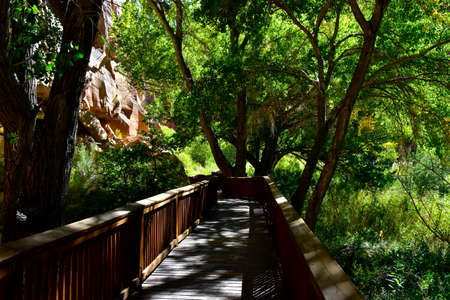 A shady walkway in Capitol Reef National Park.