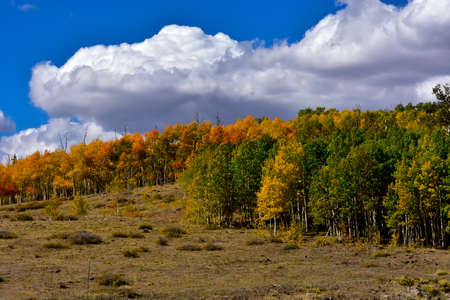 Beautiful fall day with Aspens changing colors. Imagens