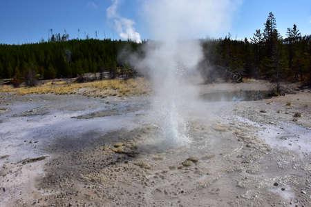 Vixen Geyser erupting in the Norris Geyser Basin, Yellowstone National Park.