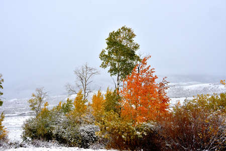 Fall colors with snow in Yellowstone National Parks Lamar Valley.