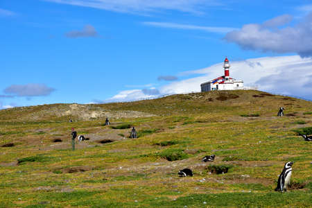 Lighthouse on Magdalena Island and colony of Magellanic Penguin in Chile. Imagens