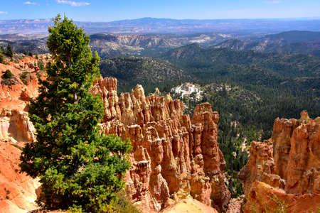 Red Hoodoos at Ponderosa Point, Bryce Canyon, National Park, Utah.