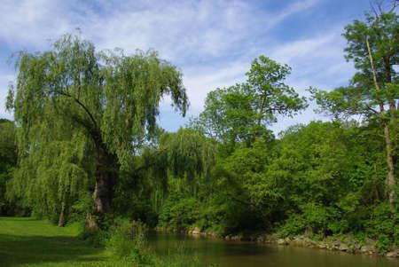 Big old trees. Reklamní fotografie