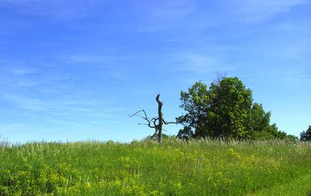 Summer field.