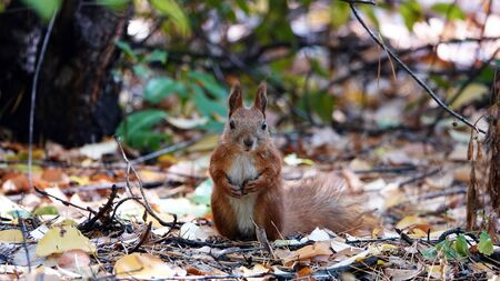 Squirrel poses for the photographer from all sides