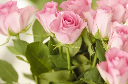 Pink roses framing top and right edge  Copy space