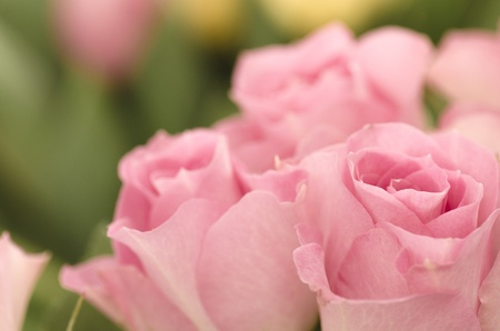 Shallow depth of field picture with romantic pink roses on foreground  Stock Photo