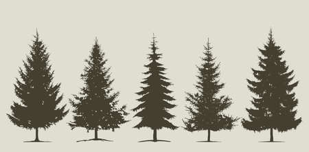 Set of coniferous tree