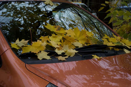 foliage on car