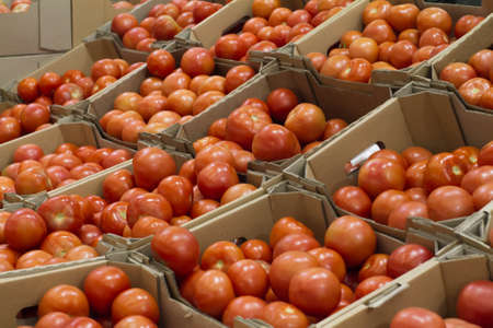 store shelf: boxes with tomatoes on shelf in store