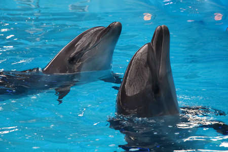 sea world: a pair of gray  dolphins in blue water