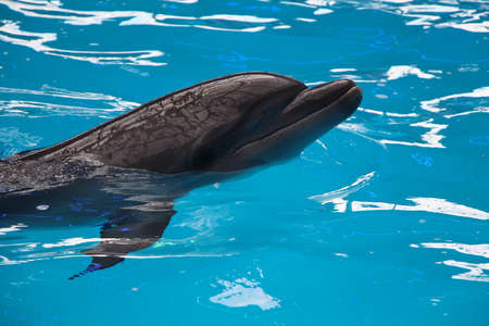 fish exhibition: dolphin in blue water