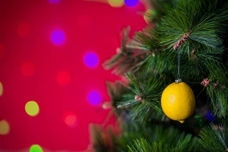 Vegan Christmas concert. Tree is decorated with fresh fruit. raw lemon on a pine branch on a red background with bokeh. The idea of minimalism and eco-friendly celebration without waste. Copy space