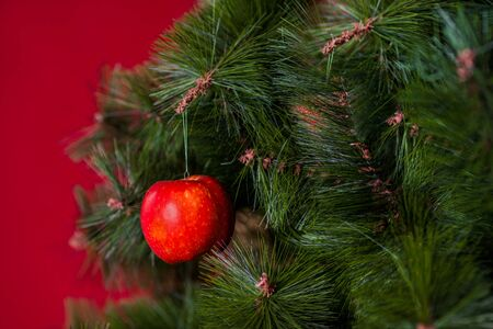 Vegan Christmas concert. The tree is decorated with fresh fruit. raw Apple on a pine branch on a red background. The idea of minimalism and eco-friendly celebration without waste. Copy space