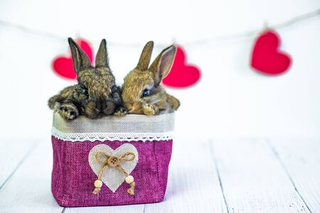 live Bunny to a basket with a red heart. Card with an animal on Valentines day. Cute little hare on a white background. Agriculture, rabbit breeding. Copy space Stock Photo