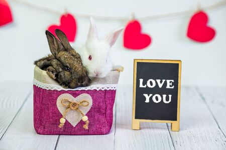 live Bunny to a basket with a red heart. Card with an animal on Valentines day. Cute little hares close up on a white background with a sign with the text Love you. Agriculture, rabbit breeding. Stock Photo