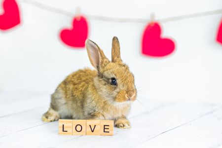 live red rabbit. Card with an animal for Valentine's Day. Cute little Bunny close-up on a white background with hearts and a sign with the text love. Agriculture, rabbit breeding