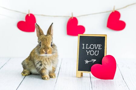 live red rabbit. Card with an animal for Valentine's Day. Cute little Bunny close-up on a white background with hearts and a sign with the text I love you. Agriculture, rabbit breeding
