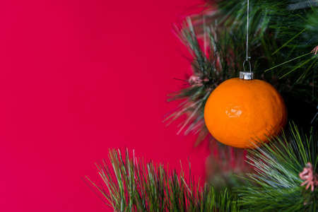 Vegan Christmas concert. Tree is decorated with fresh fruit. raw Mandarin on branch of a pine tree on a red background. The idea of minimalism and eco-friendly celebration without waste. Copy space